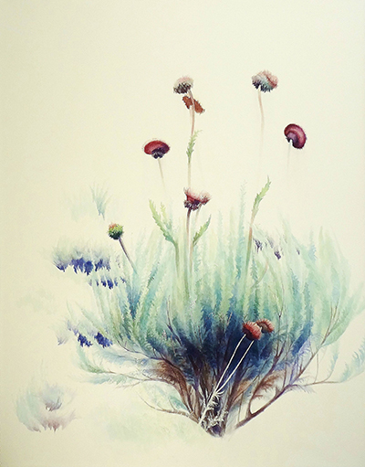 2015 Michelle Podgorski Thistle Watercolor 50″ x 39″